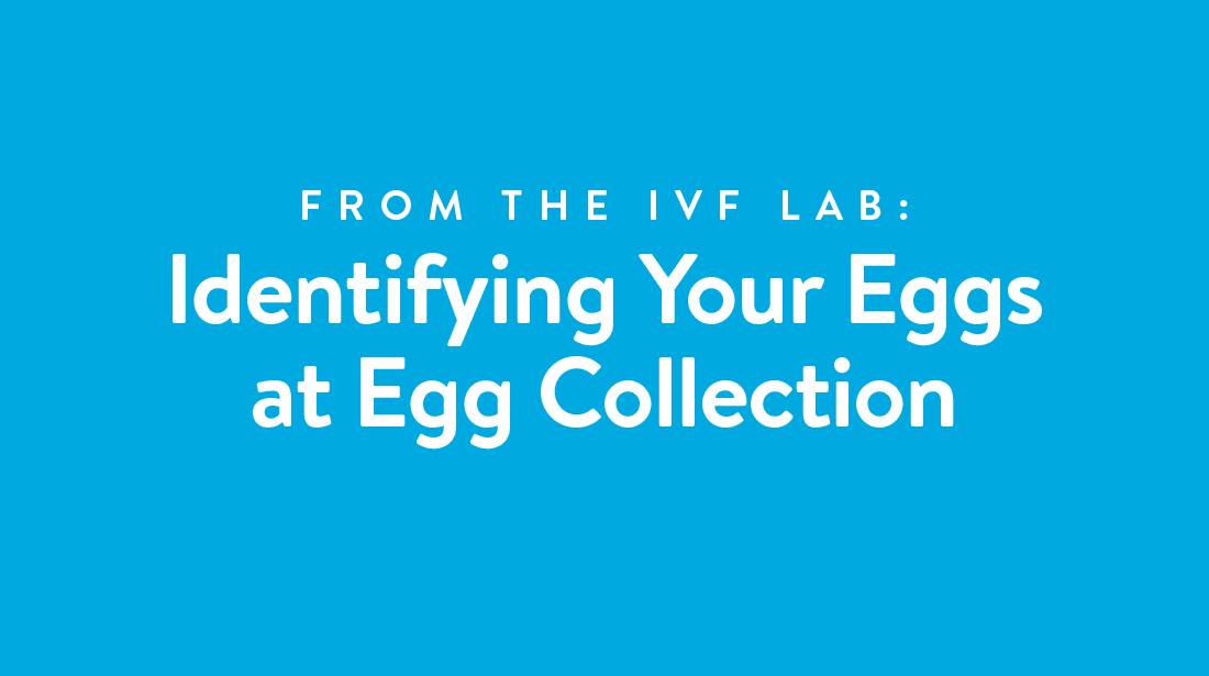 From the IVF Lab: Identifying Your Eggs at Egg Collection - Preview